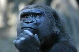 scimmia_dubbiosa