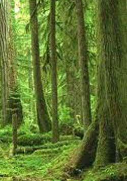 foresta scozzese